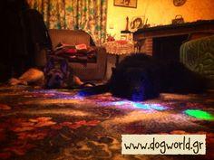 Dog Training Dog Training, Dogs, Painting, Art, Art Background, Dog Training School, Pet Dogs, Painting Art, Kunst