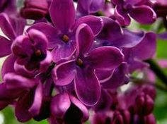 Image result for plum color