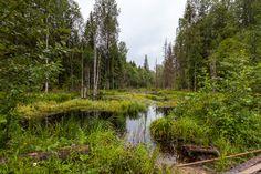 Кенозерский национальный парк – особо охраняемая природная территория, один из последних островков исконного русского жизненного уклада, культуры и традиций.