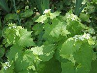Comment récolter et conserver les plantes médicinales ? - Cuisine Campagne