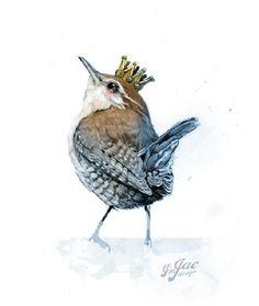 Winterkoning, Winterwren. The king of the dutch forest.