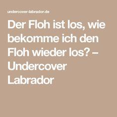 Der Floh ist los, wie bekomme ich den Floh wieder los? – Undercover Labrador