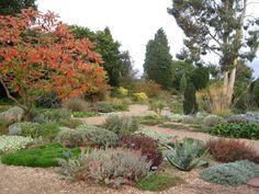 Beth Chatto Gravel Garden, Garden Plants, Garden Landscaping, Water Garden, Beth Chatto, Drought Tolerant Garden, Xeriscaping, Maze, Countryside