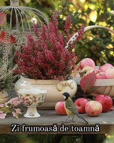 Still Life, Autumn, Apple, Day, Pretty, Plants, Beauty, Landscapes, Apple Fruit