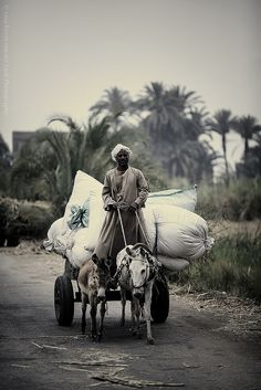 transport near Luxor, Egypt