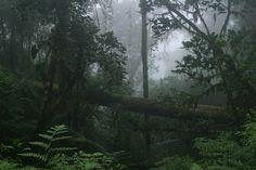 Es un parque nacional en Costa Rica. Esta en Costa Rica.  Se puede a buscar a arboles.