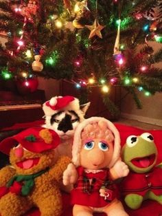 A Christmas Muppet | 26 Things Cats Are Not
