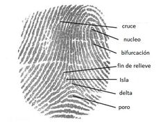 Junior Detective Badge Fingerprint Types free printable