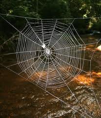 Spider web Mandala.  Fibonnaci sequence. https://www.facebook.com/soulstruth