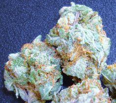 OG Kush::trichome::frosty nugs::dank buds ::ganja::smoke some::stank dank::THC:: cannabis::NoEllie0123