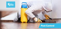 Things To Understand Before Getting A Pest Control Done At Your Home Place.