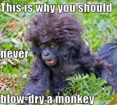 Check out: My face when I miss my alarm. One of our funny daily memes selection. We add new funny memes everyday! Bookmark us today and enjoy some slapstick entertainment! Haha Funny, Funny Cute, Funny Shit, Funny Humor, Funny Stuff, Funny Sayings, Hilarious Memes, Funny Drunk, Drunk Memes
