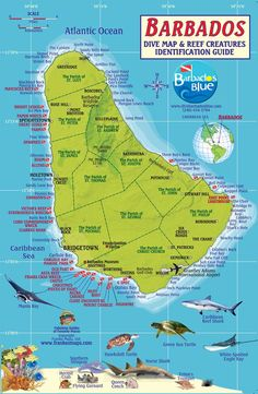 Large Detailed Tourist Map Of Barbados Barbados Large Detailed - Tourist map of barbados