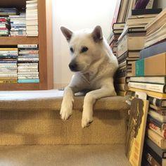 Dog & Books