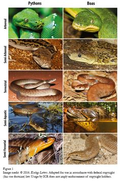 Convergent Evolution or Design-Based Adaptation? | The Institute for Creation Research