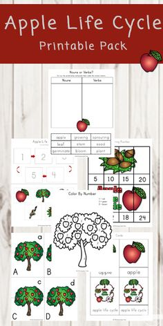 FREE Apple Life Cycle Printable Worksheets - help kids learn about apple life cycle alphabet letters uppecase and lower case letter match skip counting colors shapes and so much more with these free printable worksheets Graphing Activities, Apple Activities, Free Kindergarten Worksheets, Phonics Worksheets, Free Printable Worksheets, Free Preschool, Autumn Activities, Worksheets For Kids, Printables