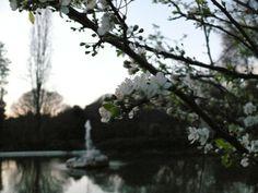 #rome #villaborghese #flowers #fountain #white