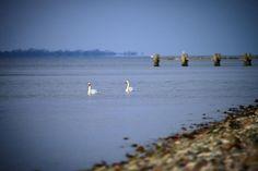 Med Bågø i baggrunden #visitfyn #fyn #nature #visitdenmark #naturelovers #natur #denmark #danmark #dänemark #landscape #assens #mitassens #vildmedfyn #fynerfin #assensnatur #sand #opdagdanmark #visitassens #instapic #danishnature #sea #danishbeach #travelpics #winter #winterindenmark #swan