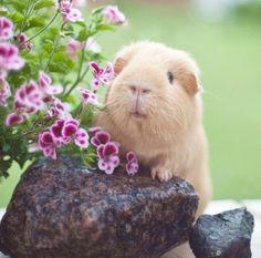 Bunnies lovers & Animals - Comunidad - Google+