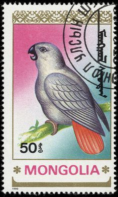 African Grey Parrot, Mongolia (1990)