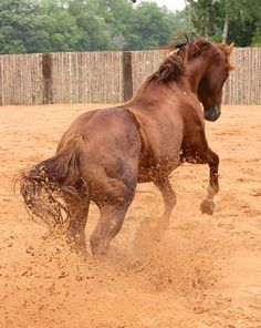 BJs Last  (Soula Jule Star x A Georgiaspurdyestlady)  2010 Sorrel AQHA Stallion