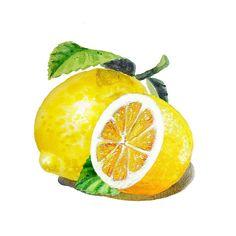 Lemon Painting, Lemon Watercolor, Fruit Painting, Watercolour Painting, Watercolor Flowers, Fruits Drawing, Food Drawing, Lemon Pictures, Lemon Images