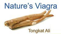 Tongkat Ali is Nature's Viagra. Java XO is loaded with the 3 of the mos potent herbal aphrodisiacs in the world; Tongkat Ali, Maca Root, and Guarana. Boost libido, increase testosterone, enhance sexual function, and help eliminate erectile dysfunction with Tongkat Ali. Learn More.