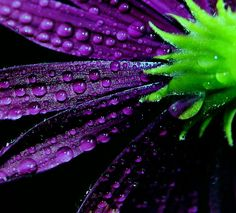24 Extraordinary Moments of Rain and Dew Photography