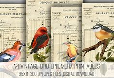 Digital Collage Sheet Download  A4 Vintage Bird Ephemera