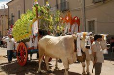 In Molise per la storica festa del patrono San Pardo a Larino
