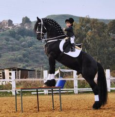 WOW! that little man knows what hes doin! Beautiful Friesian too. :)