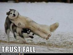 Huskies - cute!