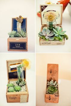 succulents planted in cigar boxes