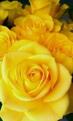 Dont yellow roses just make you smileey do me and always yellow roses mean freindship mightylinksfo