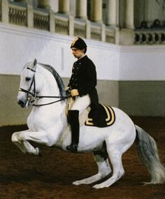 The Levade. One of the first dressage airs taught, this position is very strenuous. The horse gradually sinks down over his hindquarters while raising his front legs and tucking them under his body. The position is held for a few seconds before the forelegs are gently returned to the ground.