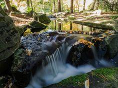 Stream into Botanical garden by Alexander Polomodov on 500px