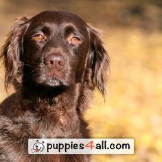 At last! Summer is a month closer! #dog #cute #puppy http://ift.tt/20ToZTG