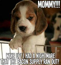 Hahaha my dog