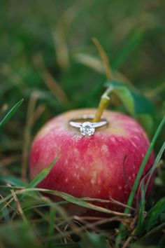 ring shot idea (apple) - Apple Orchard Engagement from Amy Rizzuto