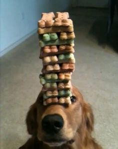 Dog Jenga! Wow!! My Tucker will never do that, but I know a dog that he will.