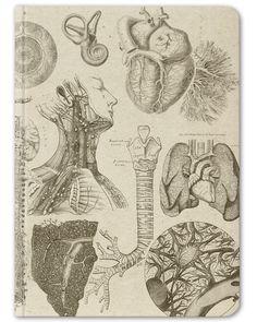 Anatomy Vintage Hardcover Journal - Large - Cognitive Surplus - 1