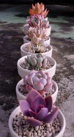 A cactus is a superb means to bring in a all-natural element to your house and workplace. The flowers of several succulents and cactus are clearly, their crowning glory. Cactus can be cute decor ideas for your room. Succulent Pots, Cacti And Succulents, Planting Succulents, Garden Plants, Indoor Plants, Planting Flowers, Succulent Arrangements, Indoor Cactus, Green Garden