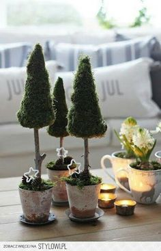 Tiny potted tree table decor.