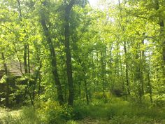 Forest behind my house in village