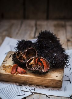 How to cook sea urchins, sea urchin or arcinos