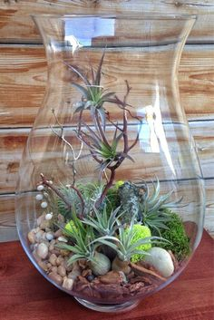 Large Easy Care Low Maintenance Air Plant Terrarium A Unique