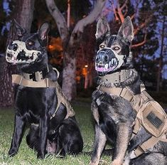 12 Splendid Dog Muzzle For Barking Small Breed Dog Muzzle Yorkie Military Working Dogs, Military Dogs, Police Dogs, Military Life, War Dogs, Animals And Pets, Cute Animals, K9 Officer, Dog Muzzle