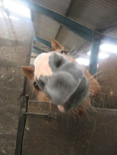 ❤ When you try to take a good picture of your horse... this is what you get…