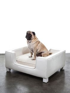 Limoges Pet Bed by SHINE by S.H.O. at Gilt