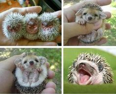 A different cute pet: don't prick yourself!!! - Imgur